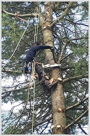 Professional tree cutting and tree removal can enhance the safety and look of your property