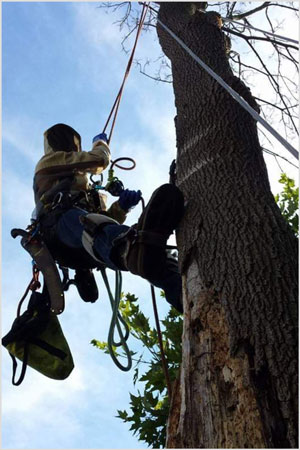 Pruning a tree can
