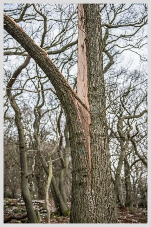 We have the experience and capability of carefully removing dangerous, storm-damaged trees effectively from your property.